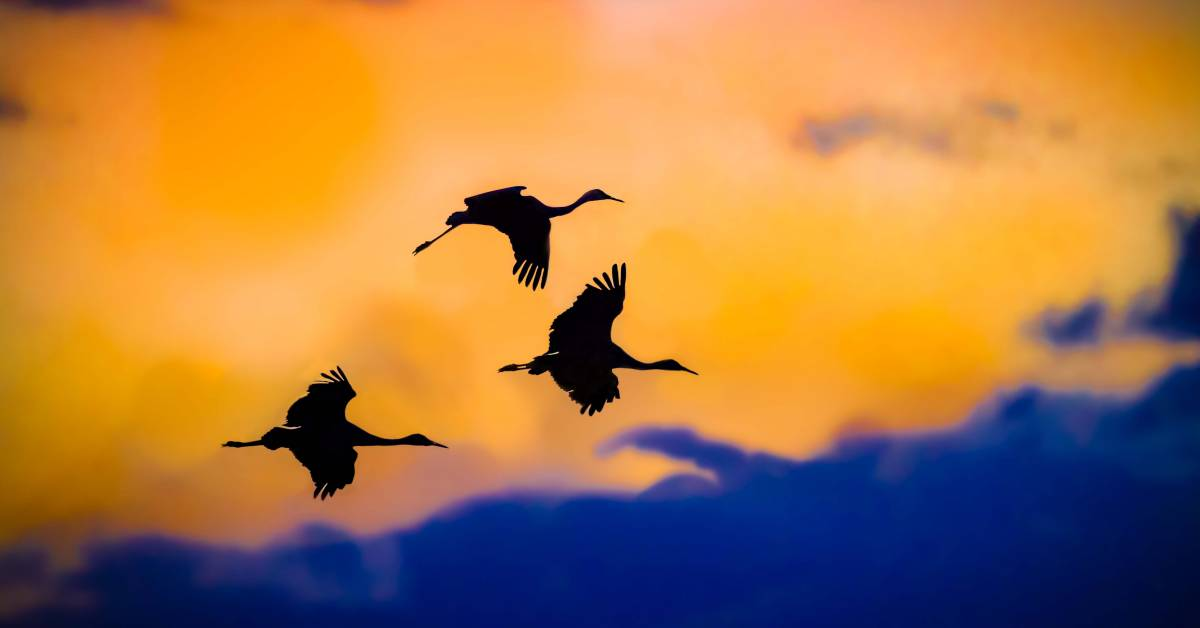 Biden Administration hits pause on rollback rule of Migratory Bird Contracts